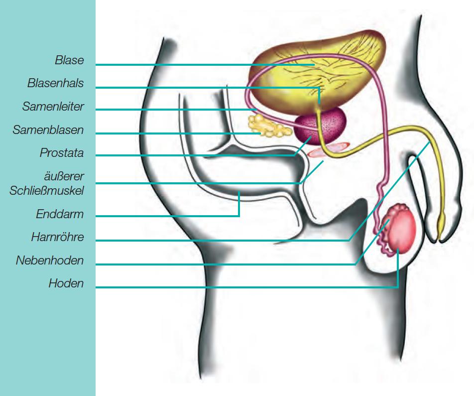 mittel gegen prostata schmerzen